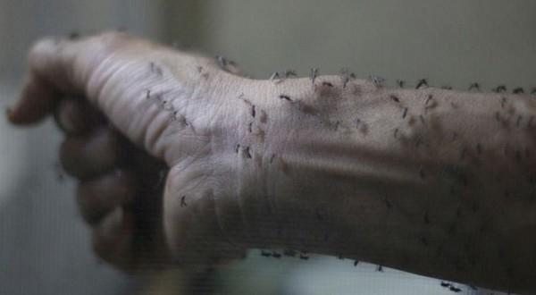 فيروس زيكا صور اخبار اعراض المرض الفيروس