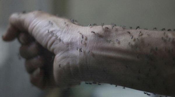فيروس زيكا الخطير ضرب 17 دولة .. تعرفوا عليه