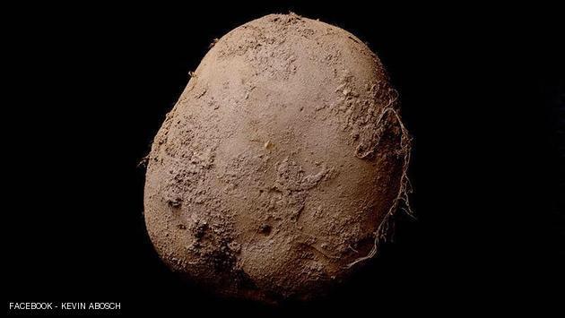 بيع صورة لحبة بطاطس بمليون يورو