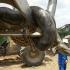 اكبر-ثعبان-في-العالم-التاريخ