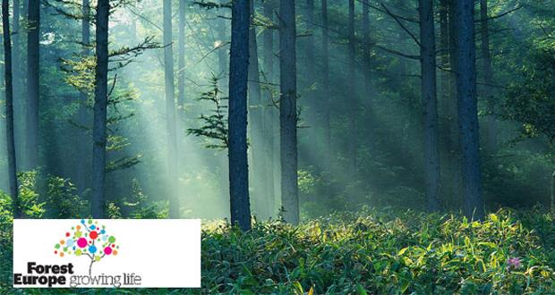 غابات-اوروبا-الاحتباس-الحراري-الصنوبر-زراعة