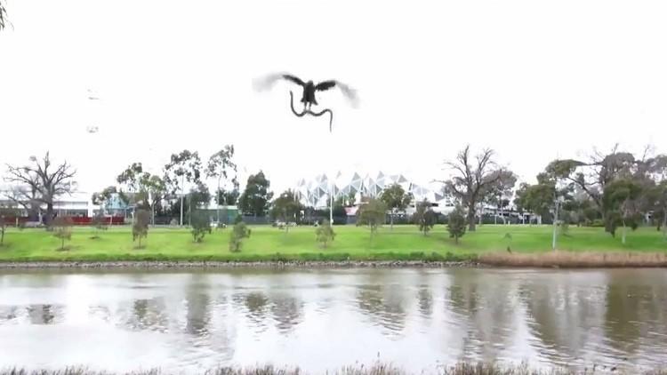 بالفيديو .. صقر يصطاد ثعباناً ويلقيه على عائلة في أستراليا