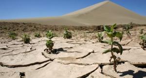 ابتكار صيني يحول رمال الصحاري إلى ارض زراعية خصبة