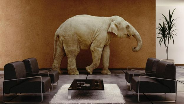 صور فيل ماموث فيلة صورة عالم الحيوان