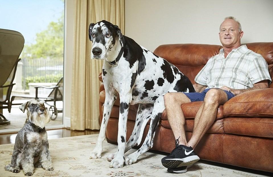أطول كلبة في العالم في فلوريدا طولها 37.96 انش  dailymail.co.uk