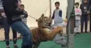 نمر يهاجم طفلة سعودية