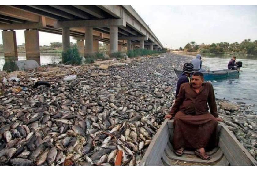 وزير الزراعة يتوجه لمحافظة بابل للوقوف على أزمة نفوق الاسماك