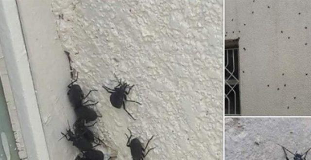 الحشرات تغزو ميسان بسبب السيول
