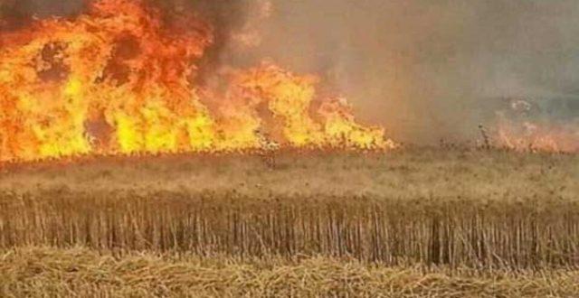 الحشد الشعبي يعلق على اندلاع الحرائق في الأراضي الزراعية بمحافظة صلاح الدين