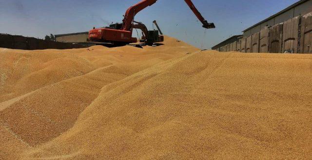 الزراعة تعلن قبول تسويق 750 الف دونم من الحنطة خارج الخطة الزراعية