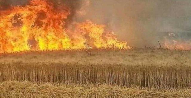 البرلمان يشكل لجنة لمتابعة قضية إحراق المحاصيل الزراعية