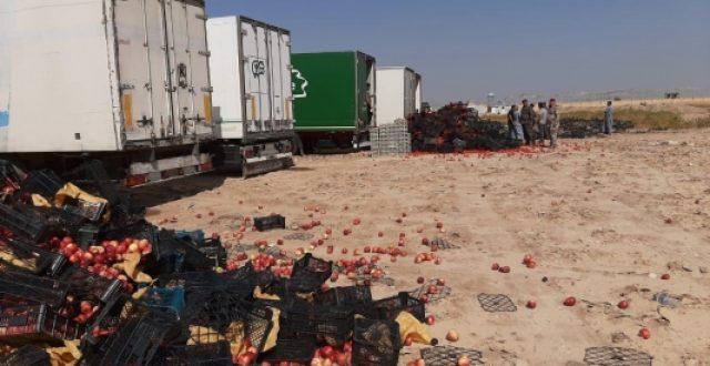 ضبط وإتلاف 7 برادات من الطماطم والتفاح الايراني الممنوع من الاستيراد