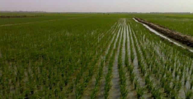 الانبار تتهم وزارة الكهرباء بالوقوف وراء تدني الواقع الزراعي في المناطق الغربية