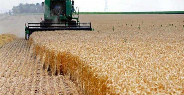 """الزراعة تعلن عن الكمية المنتجة من """"رز العنبر"""""""
