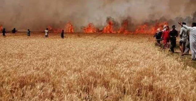 عاجل …احتراق محاصيل الحنطة بمساحات واسعة في منطقة الاحيمر (الشرتة) إحدى قرى قضاء المشخاب جنوب محافظة النجف الأشرف