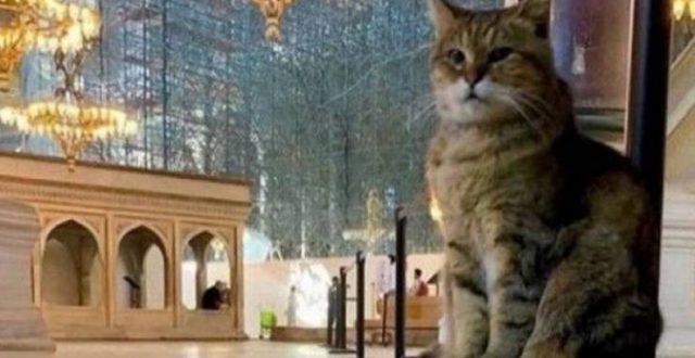 خبر حزين عن قطة 'آيا صوفيا' الشهيرة