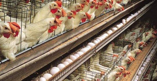 وزير الزراعة يعلن السيطرة على الحدود وتحديد سعر البيض والدجاج