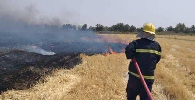 الدفاع المدني يخمد حريقاً وتنقذ 180 طناً من محصول الحنطة في الديوانية