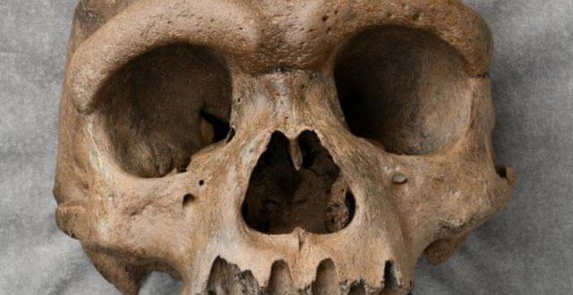 العثور على جمجمة تعود لنوع جديد من الانسان في الصين