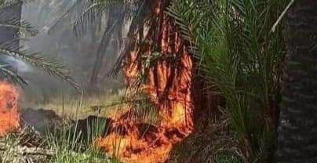 بالصور.. حريق بستان للنخيل في قضاء عفك شرقي الديوانية