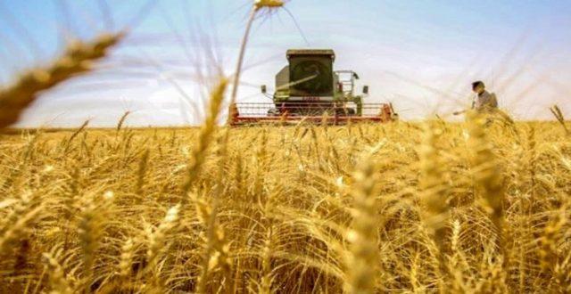 الزراعة النيابية: صرف 244 مليار دينار للفلاحين خلال يومين